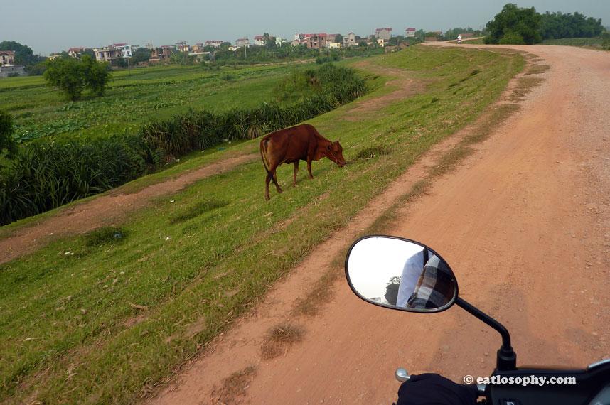 vietnam_scooter_sightseeing