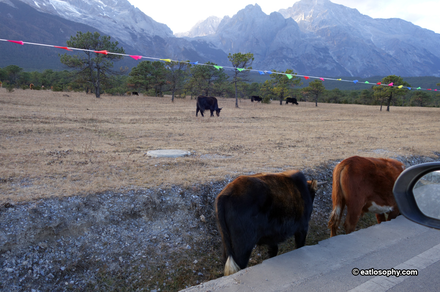blue mooon valley cattle
