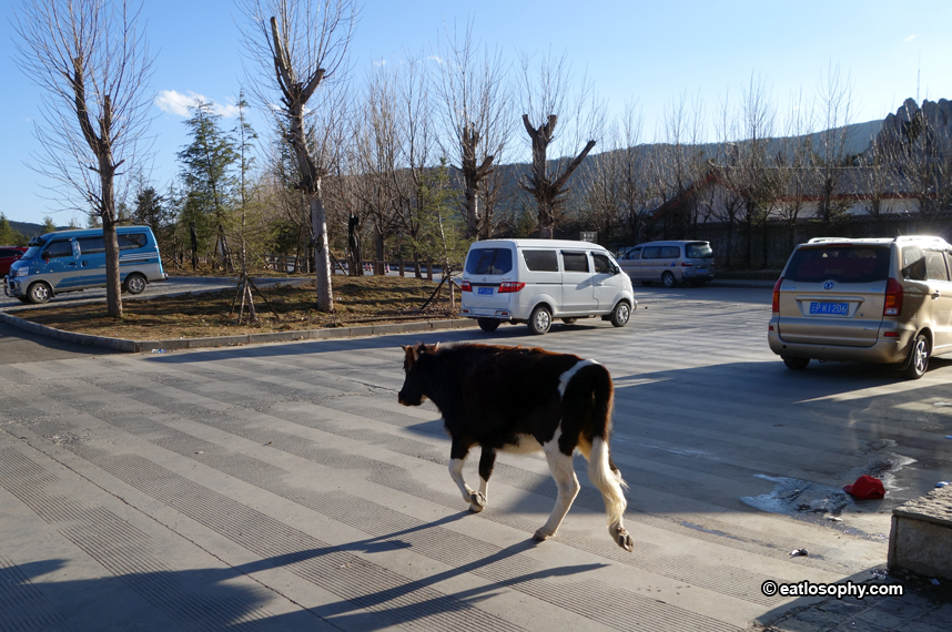 cow in blue moon valley