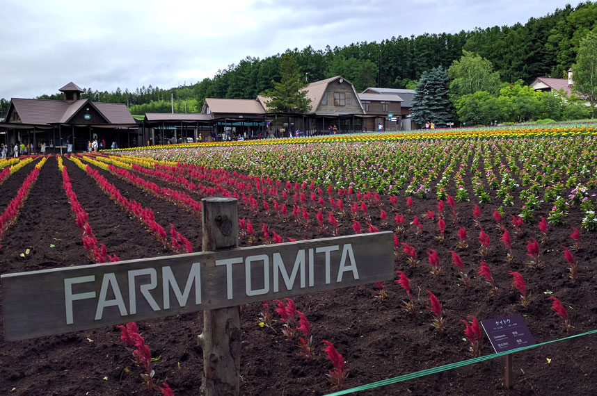 farm-tomita-flowers